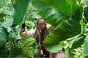 Movie Photo: Pirates of the Caribbean: On Stranger Tides (1)