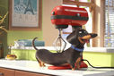 Movie Photo: The Secret Life of Pets (4)
