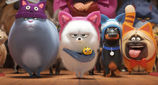 Movie Photo: The Secret Life of Pets 2 (5)